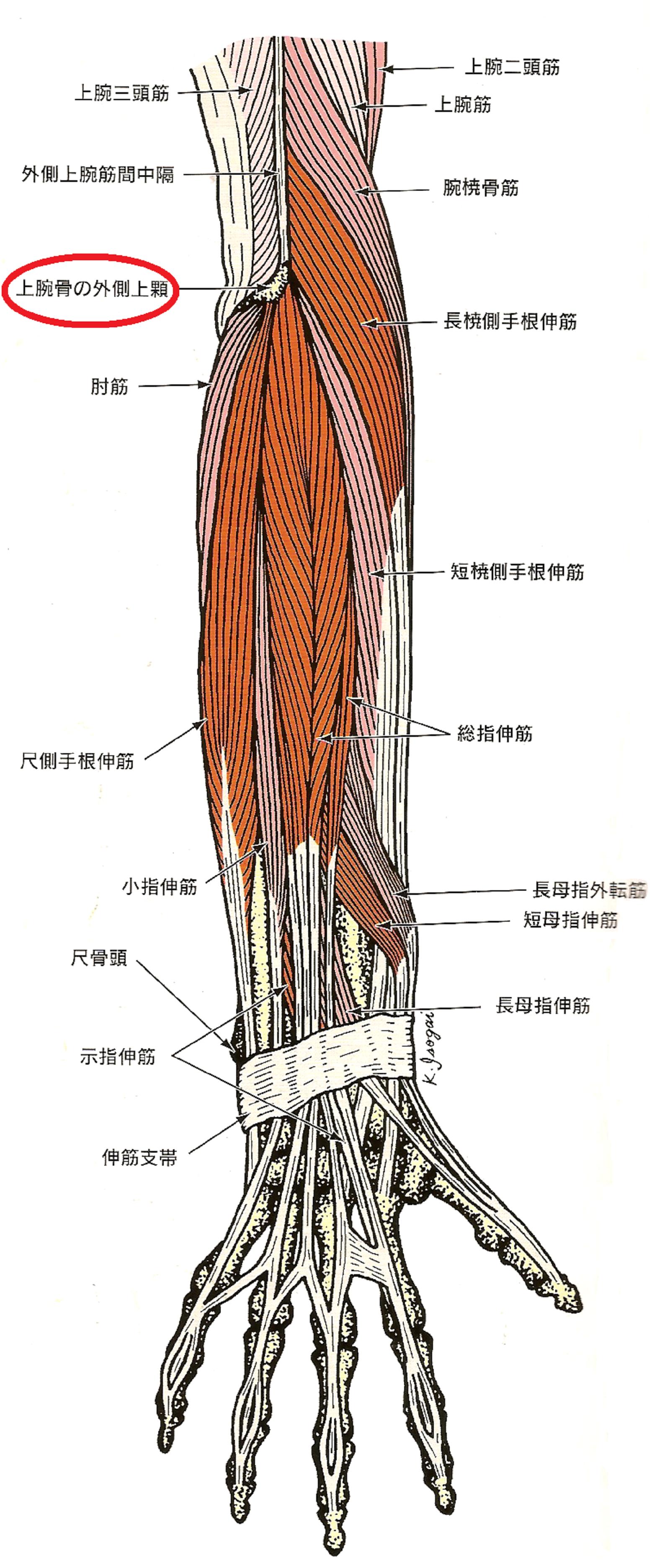 外側 痛み 二の腕